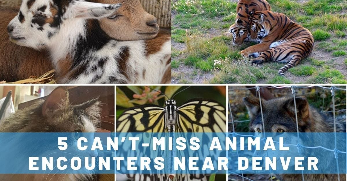 5 Can't-Miss Animal Encounters Near Denver