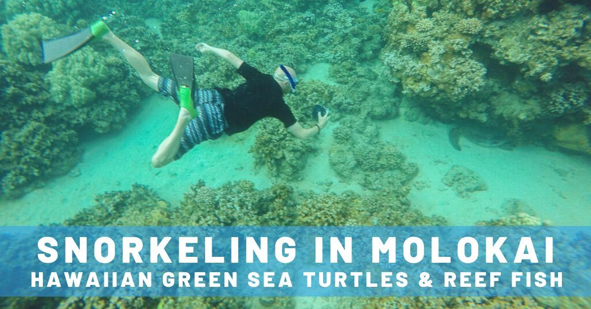 Snorkeling in Molokai with Hawaiian Green Sea Turtles & Reef Fish
