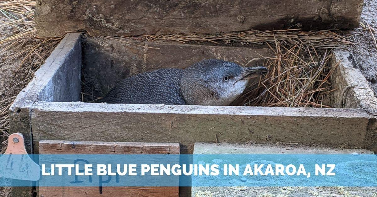 little blue penguins in new zealand