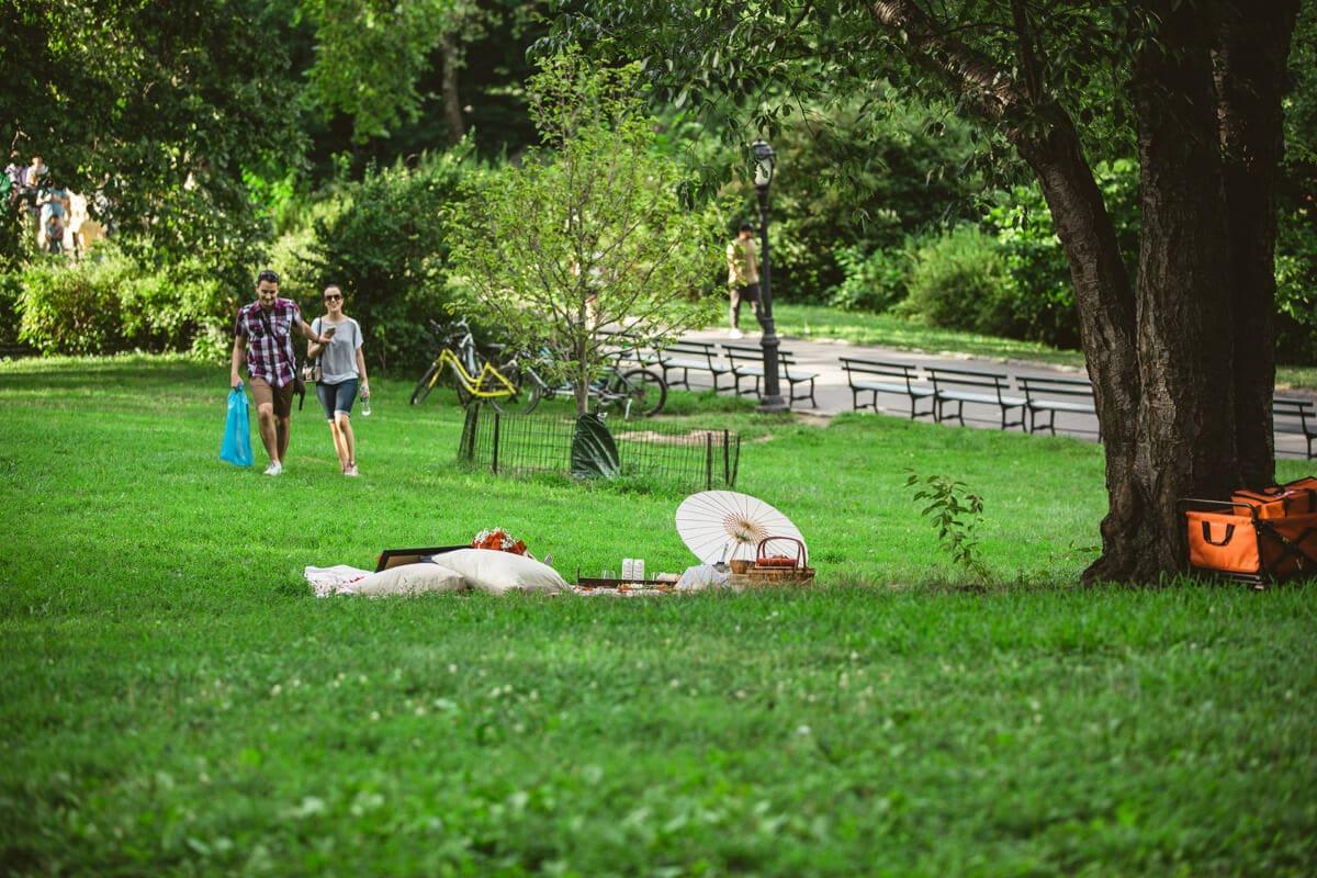 Photo 2 Central Park Picnic Proposal