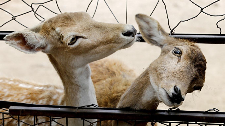 zoo de buenos aires 2017 ecoparque