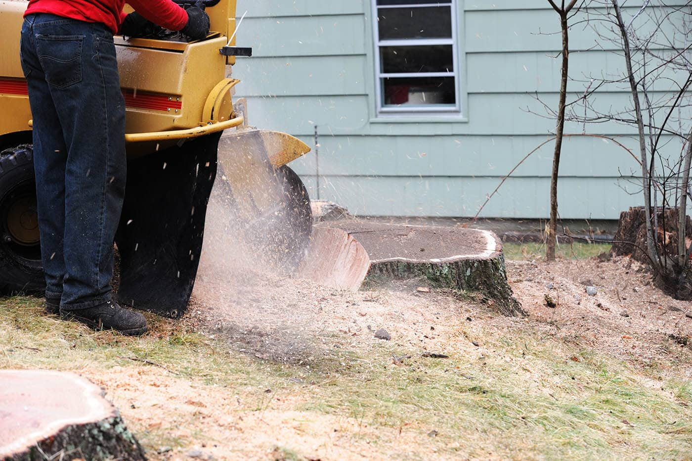 Delmarva Arborists - Stump Grinding in Ocean Pines, MD