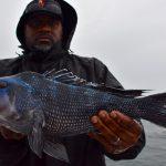 Black Sea Bass Catch - Cape Cod