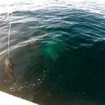 Fishing for Bluefin Tuna
