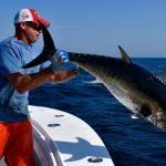 Fisherman Putting Tuna Back in Water