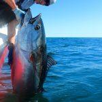 Fisherman Lifting Tuna Aboard