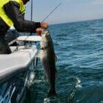 Cape Cod Fishing Charters Big Striped Bass
