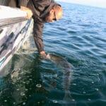 Cape Cod Fishing