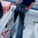 Cape Cod Bluefin Tuna Fishing with Reel Deal