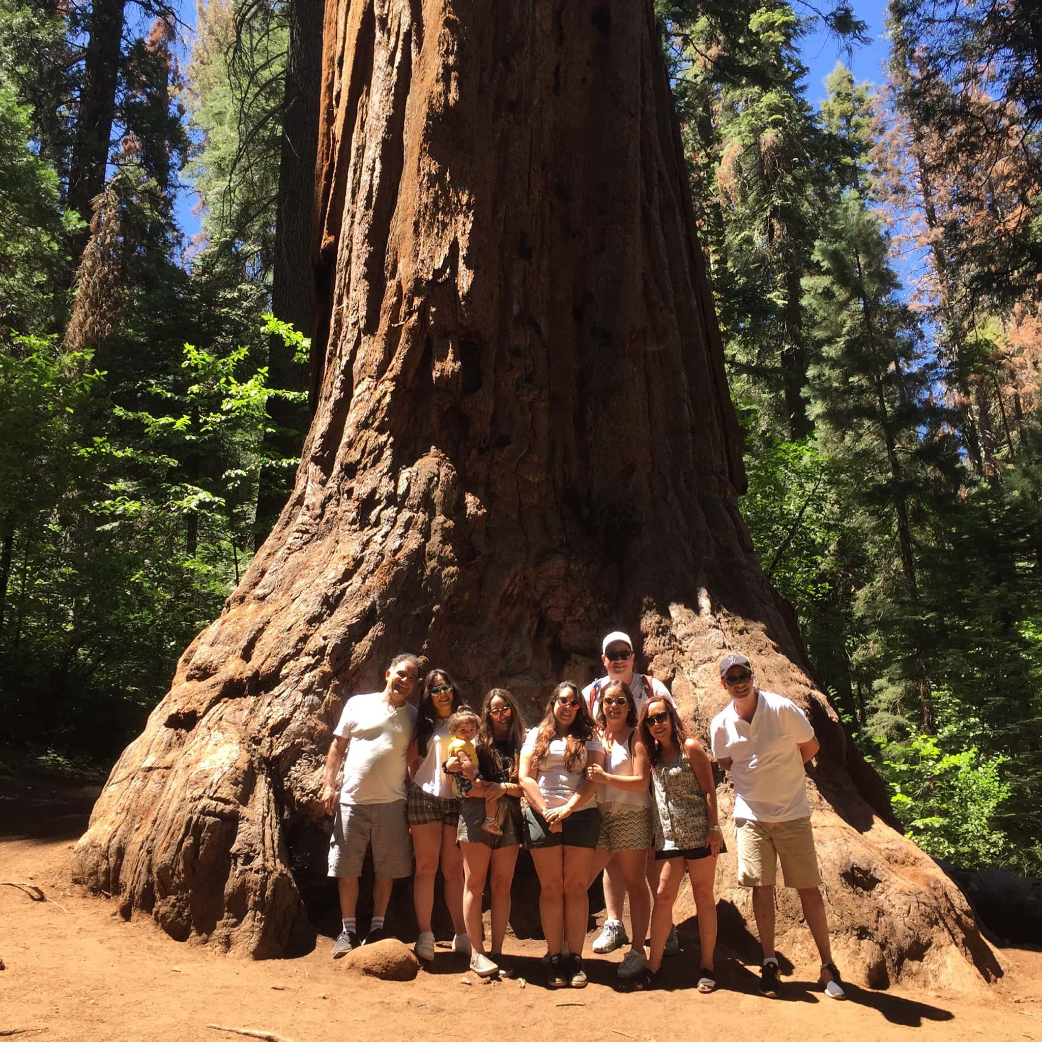 Where to Find Redwood Trees in Yosemite