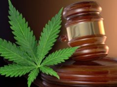 Marijuana Bill Approved in the Reno Senate Awaiting to Be a Law