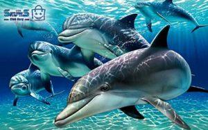 پارک دلفین کیش تفریحات کیش با قیمت