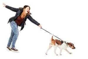 angeleinter hund