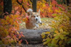 Hund im Herbst
