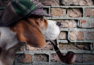 Krimispaziergang mit Hund