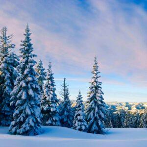 Зимние каникулы где провести