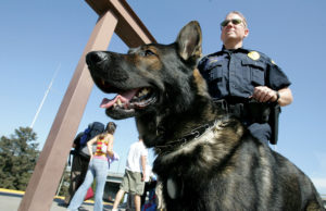 San Diego Sniffing Dogs Revealed Illegal Pots During an Inspection