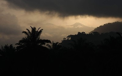 Cameroon crisis threatens Cross River Gorillas as displaced people flee to protected areas