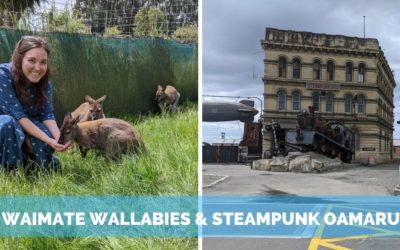 Wallabies in Waimate & Steampunk in Oamaru, NZ
