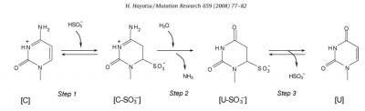 Bisulfite Conversion Figure Hayatsu Mutat Res. 2008 PMID: 18485805