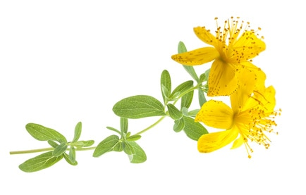 St. John's wort may be a good migraine treatment