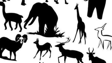 6 интересных фактов о животных