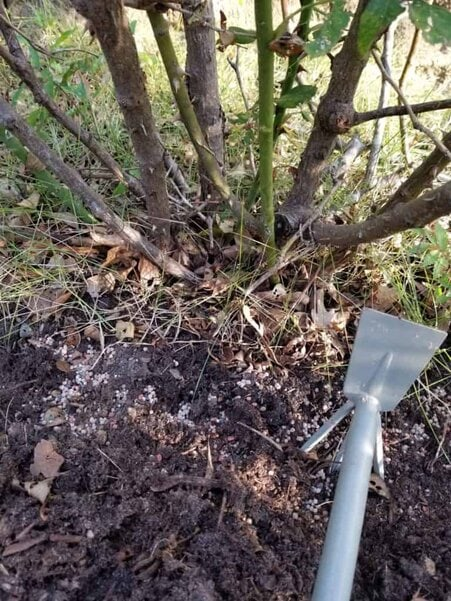 3 Care Tips for Knock Out Roses, How to care for knockout roses, all in one rose care