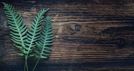 best fertilizer for ferns