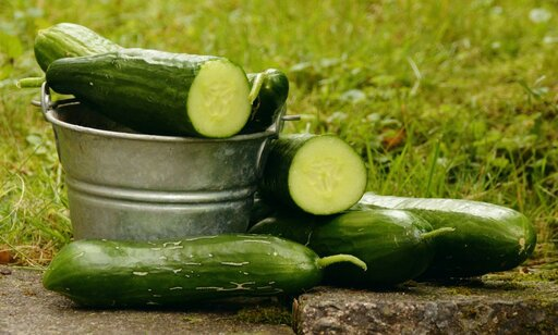 best companion plants to grow with cucumbers