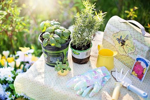 how to grow organic herbs