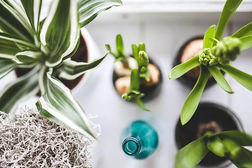 best fertilizer for houseplants