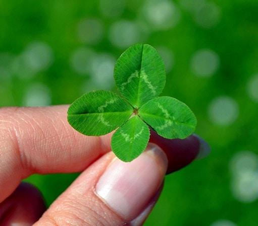 best fertilizer for clover