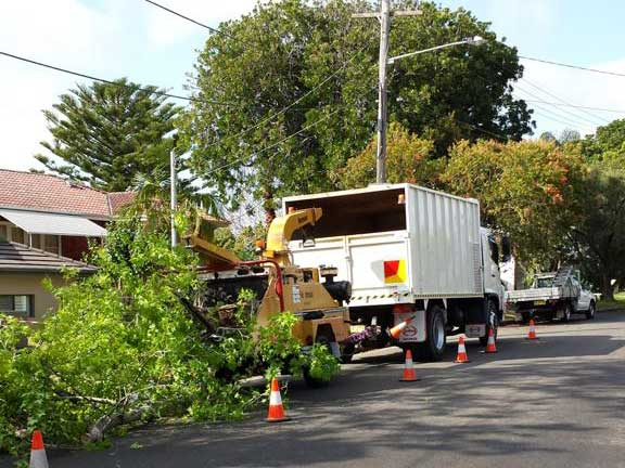 Quick Chip Tree Pruning Services Sydney