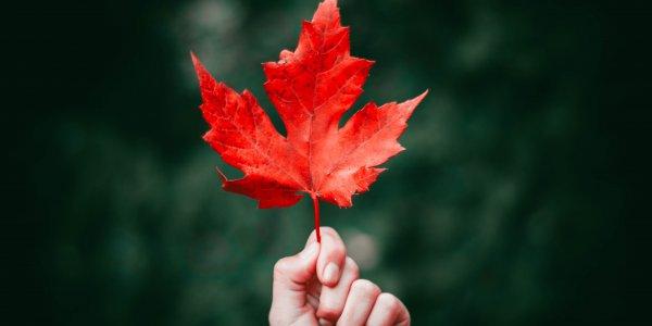 What's new in Canada besides coronavirus?
