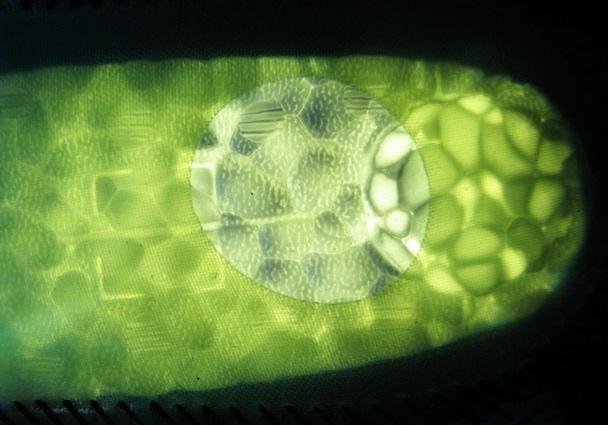Пропустим яркий свет через межподошву Boost. Результат впечатляет