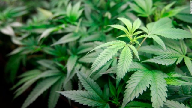 Titusville Now Permits Medical Weed Dispensaries