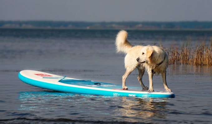 dog on an inflatable stand up paddle board on a lake