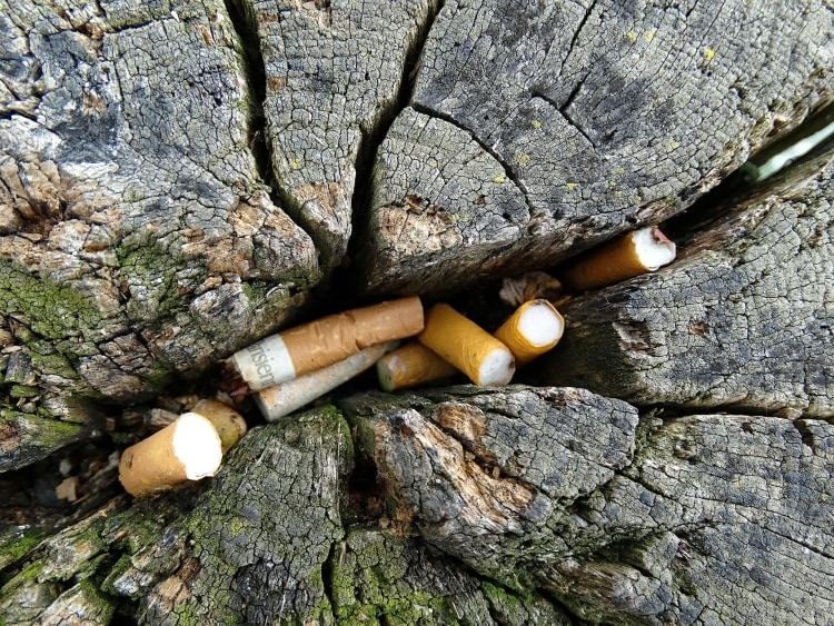 cigaretta csikk fa tönk