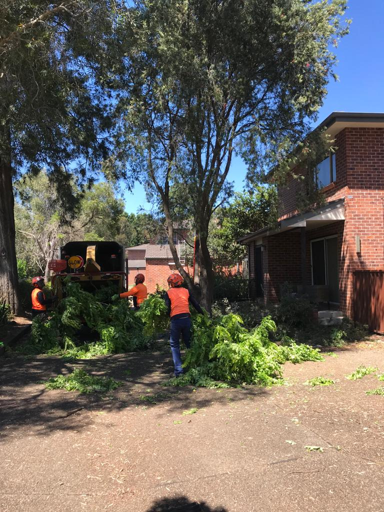 Quick Chip Tree Removal Services Sydney