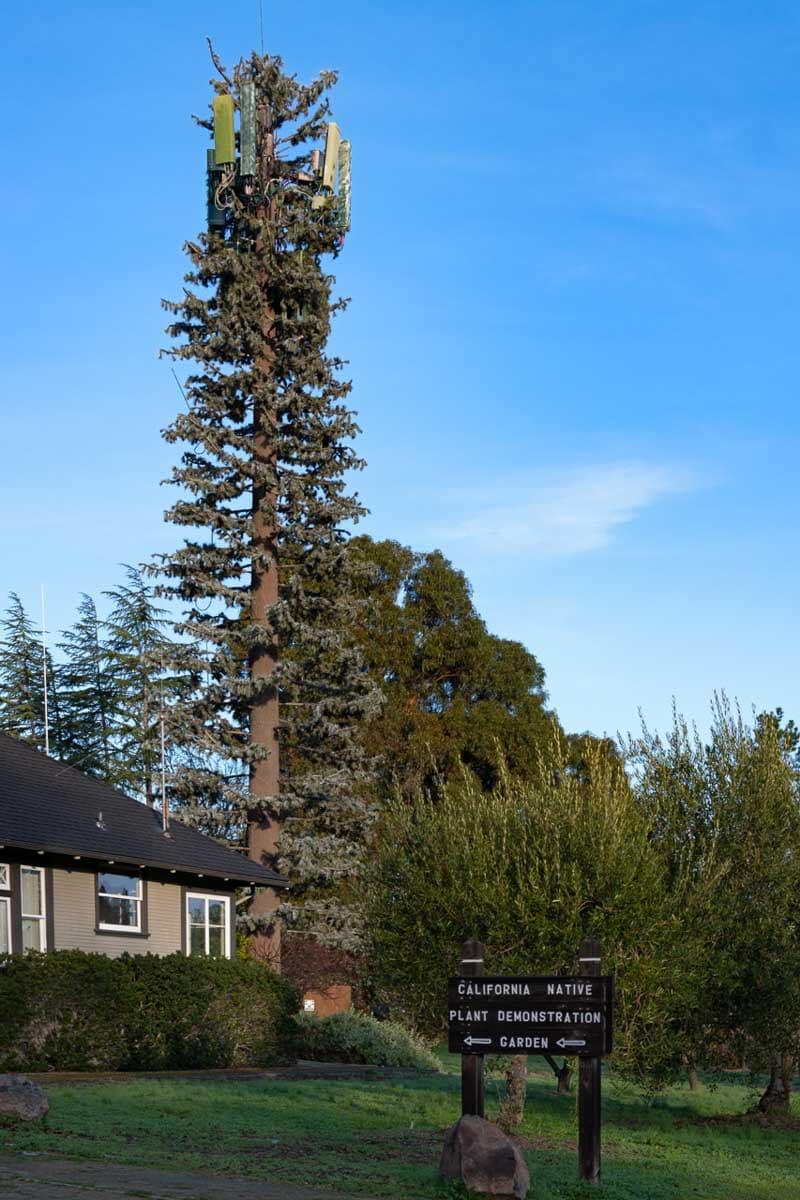 Annette Burke - LeMay Fauxliage Native Tree, Los Altos Hills, CA