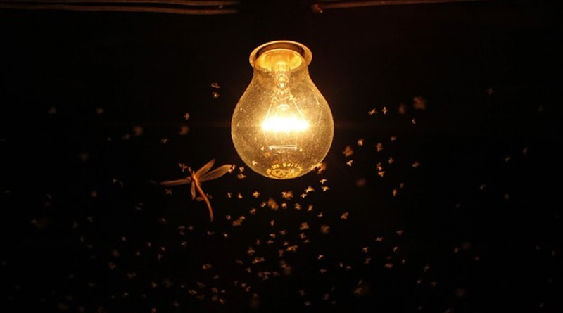 Scientific study reveals which light bulbs attract fewest insects