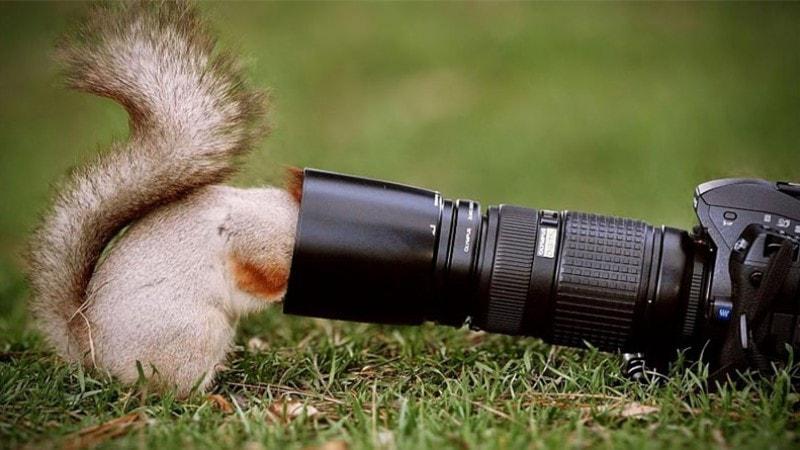 Squirrel with camera