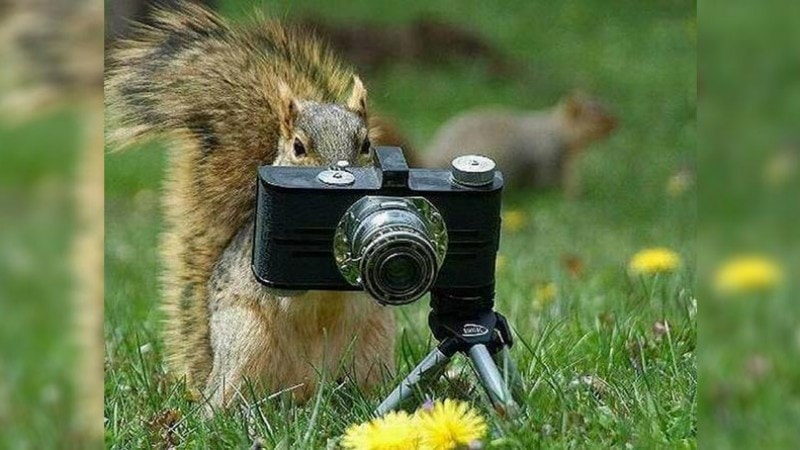 Squirrel taking picture with camera