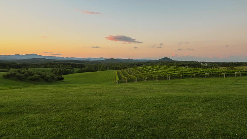 Beautiful sunset of the vineyard with the Blue Ridge mountains in the background