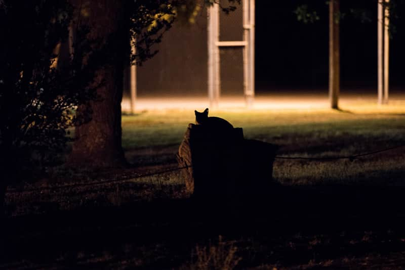 silhouette of Fox-like creature on top of a stump at our campground near carlsbad