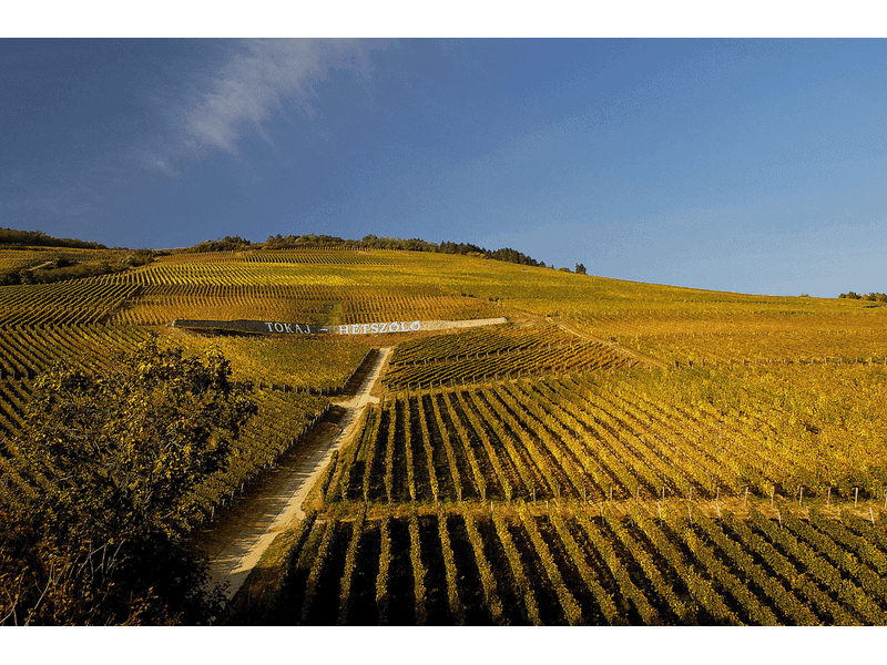 What is so special about Tokaj?