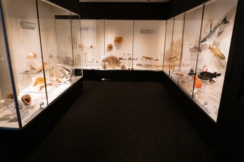 national history museum of Kopavagur - Icelandic animal display