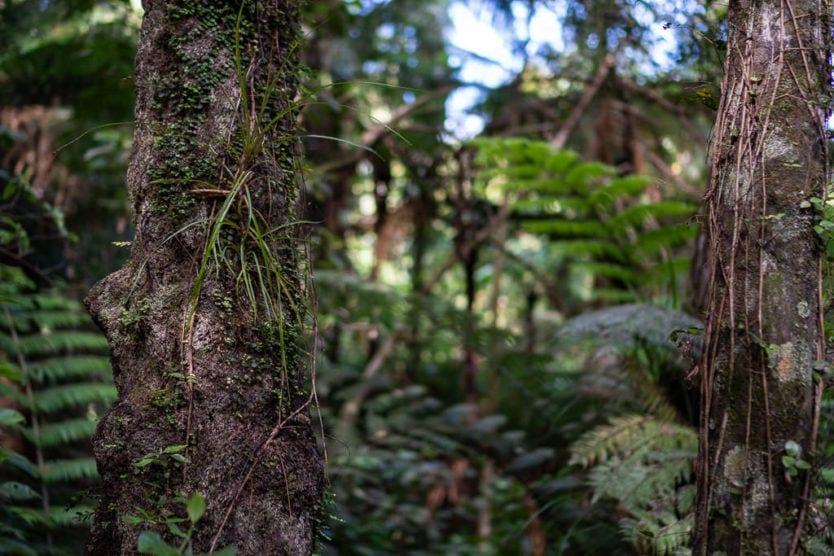 Forested area of Mount Tutu Eco-Sanctuary, an eco-friendly accommodation near rotorua new zealand