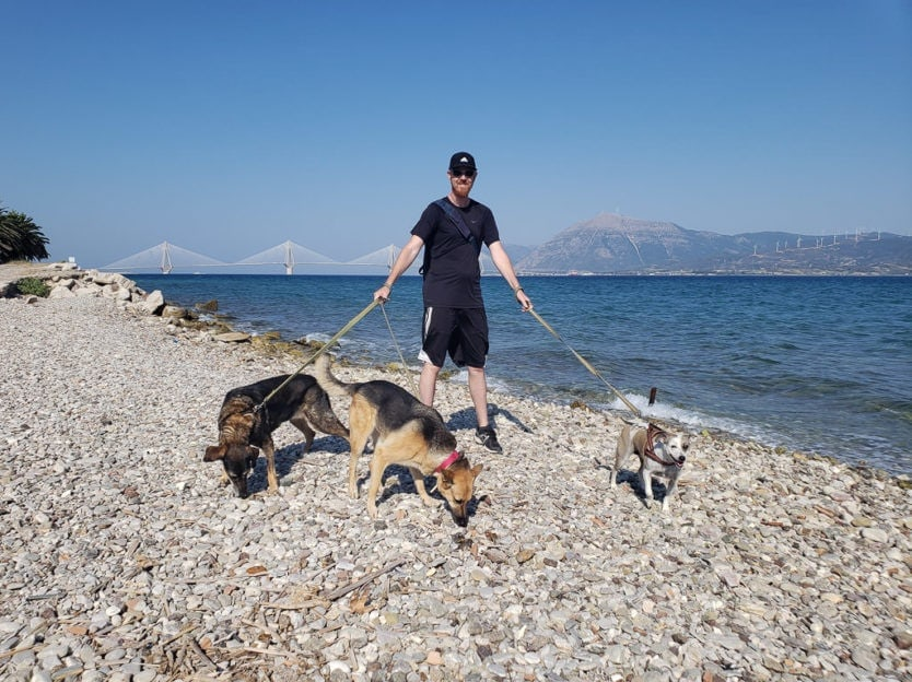 walking three dogs along beach in greece while international house sitting