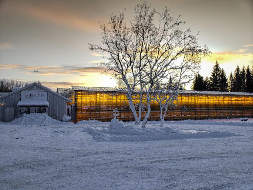 Friðheimar Greenhouse restaurant in golden circle iceland